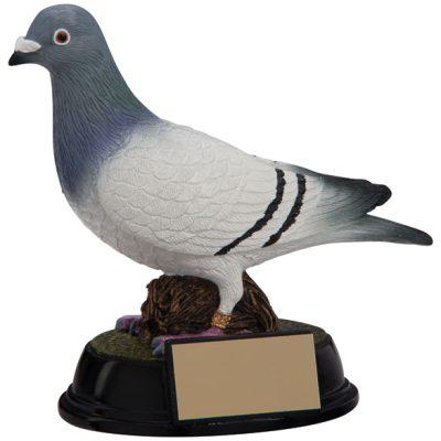 Pigeon Racing Trophies